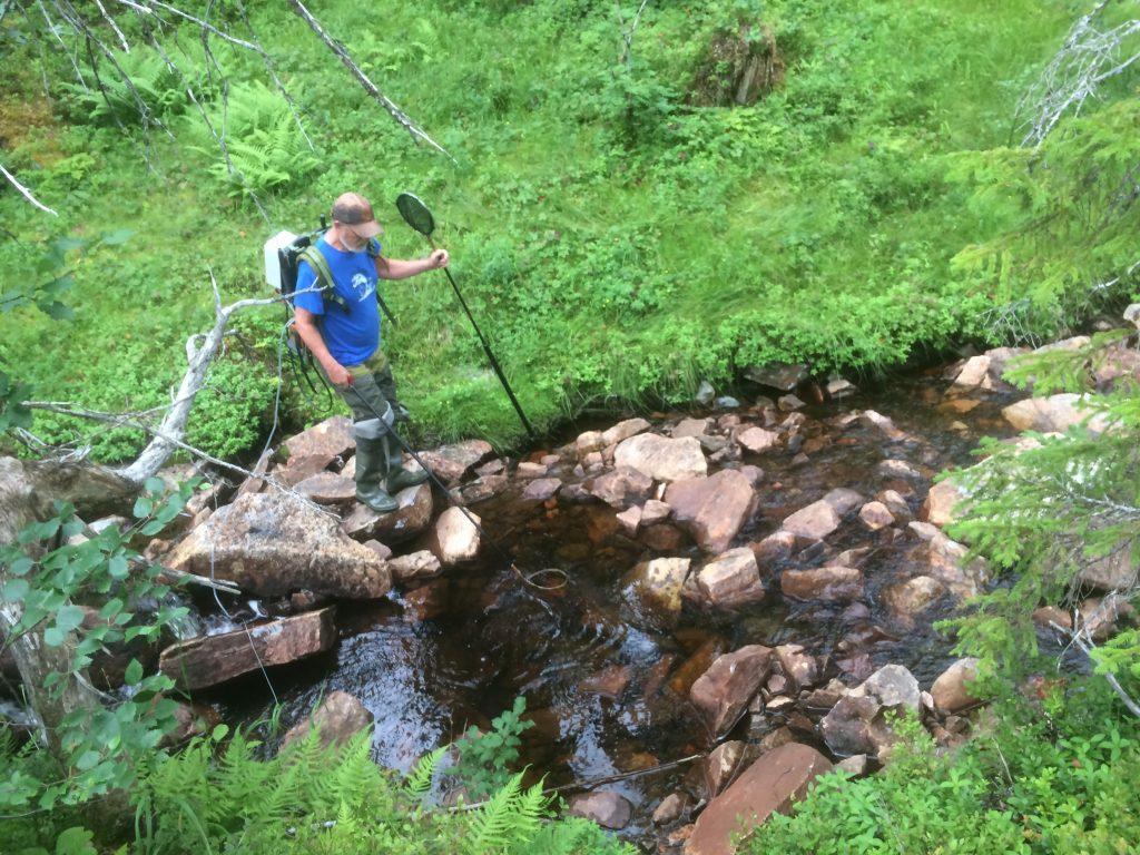 El-fiske i Nolo-bekken